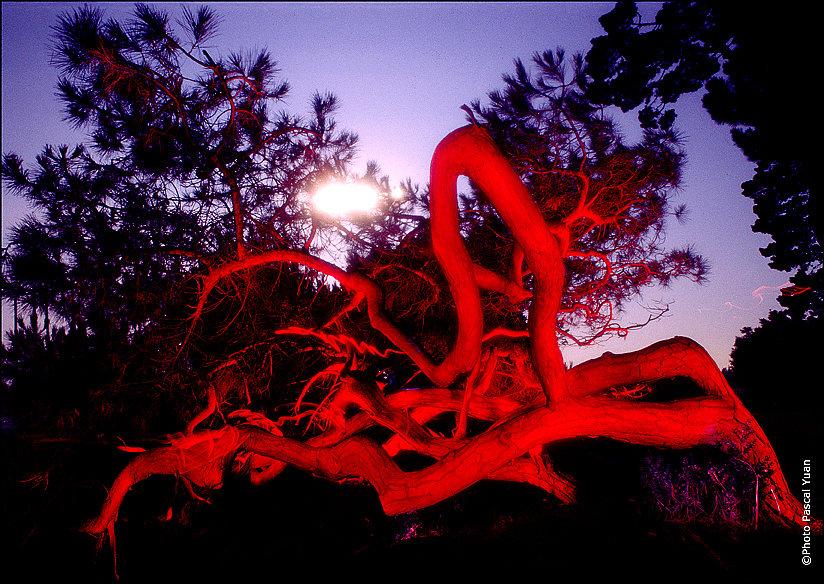 L'arbre ardent